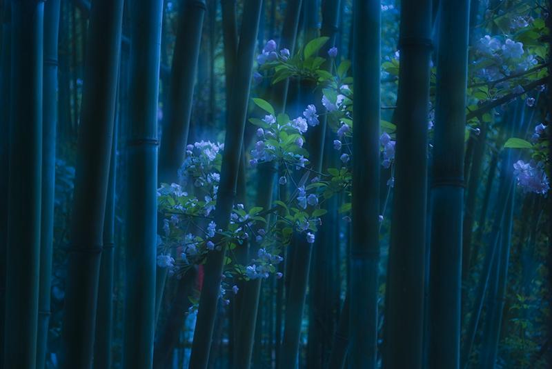 黄雨+春天的竹林.jpg
